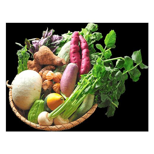 寒冷地に息づく冬野菜